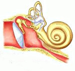 Ушная труба как называется по другому