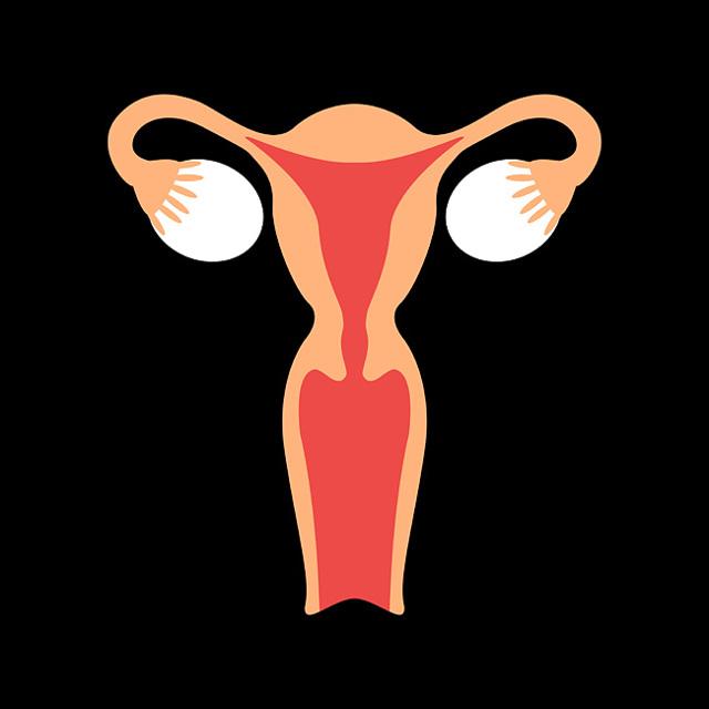 Файловые трубы у женщин