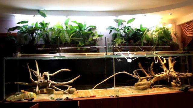 Все для фитинга в аквариуме